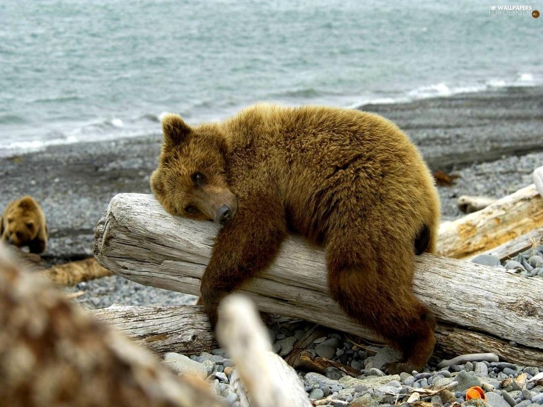 teddy-trees-bear-tired